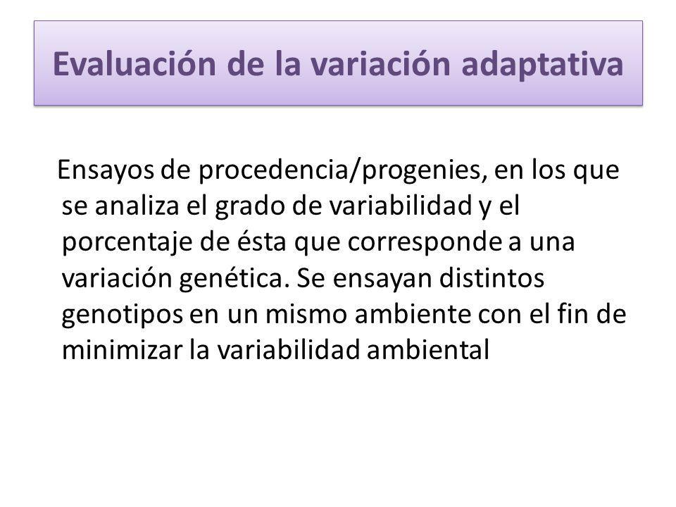Evaluación de la variación adaptativa Ensayos de procedencia/progenies, en los que se analiza el grado de variabilidad y el porcentaje de ésta que cor