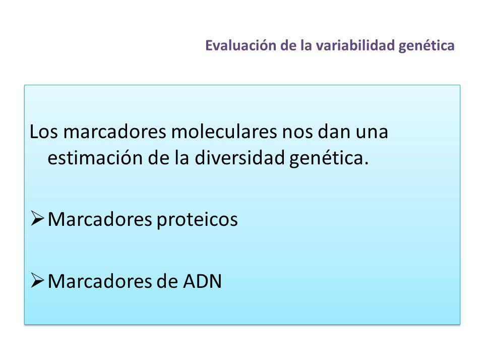 Evaluación de la variabilidad genética Los marcadores moleculares nos dan una estimación de la diversidad genética. Marcadores proteicos Marcadores de