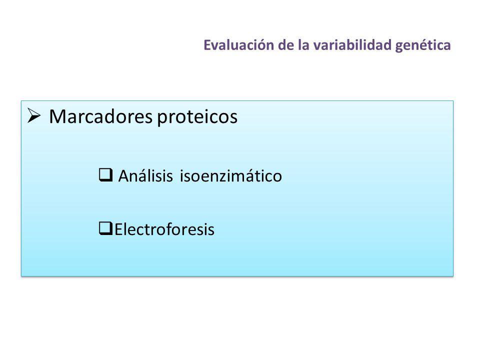 Evaluación de la variabilidad genética Marcadores proteicos Análisis isoenzimático Electroforesis Marcadores proteicos Análisis isoenzimático Electrof