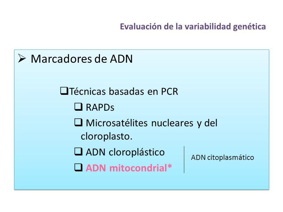 Evaluación de la variabilidad genética Marcadores de ADN Técnicas basadas en PCR RAPDs Microsatélites nucleares y del cloroplasto. ADN cloroplástico A