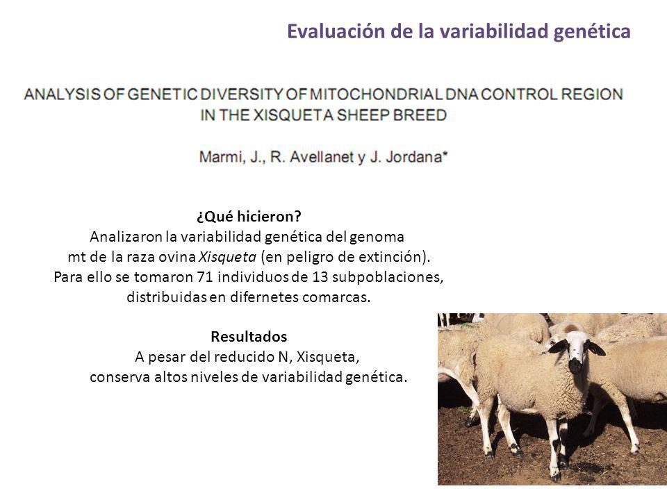 Evaluación de la variabilidad genética ¿Qué hicieron? Analizaron la variabilidad genética del genoma mt de la raza ovina Xisqueta (en peligro de extin