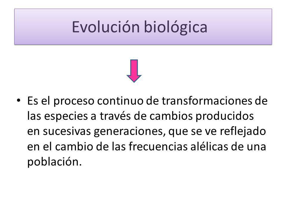 Evolución biológica Es el proceso continuo de transformaciones de las especies a través de cambios producidos en sucesivas generaciones, que se ve ref