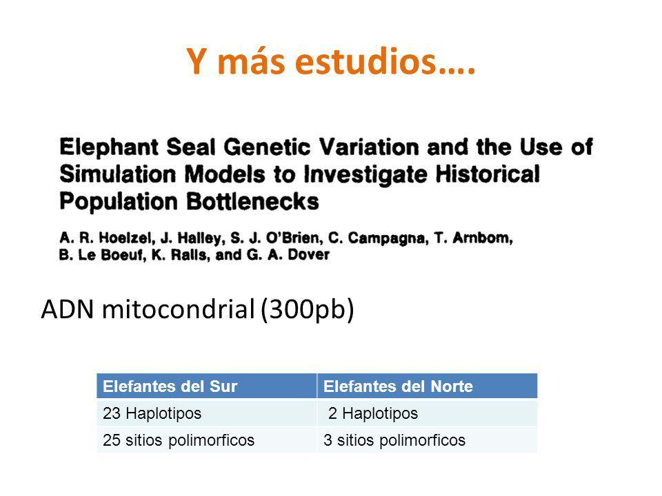Y más estudios…. ADN mitocondrial (300pb) Elefantes del SurElefantes del Norte 23 Haplotipos 2 Haplotipos 25 sitios polimorficos3 sitios polimorficos