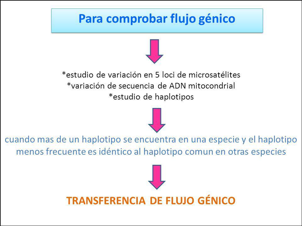*estudio de variación en 5 loci de microsatélites *variación de secuencia de ADN mitocondrial *estudio de haplotipos cuando mas de un haplotipo se enc
