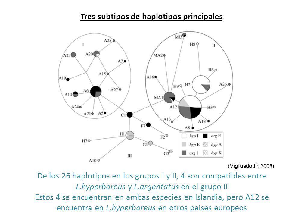 Tres subtipos de haplotipos principales ( Vigfusdottir, 2008) De los 26 haplotipos en los grupos I y II, 4 son compatibles entre L.hyperboreus y L.arg