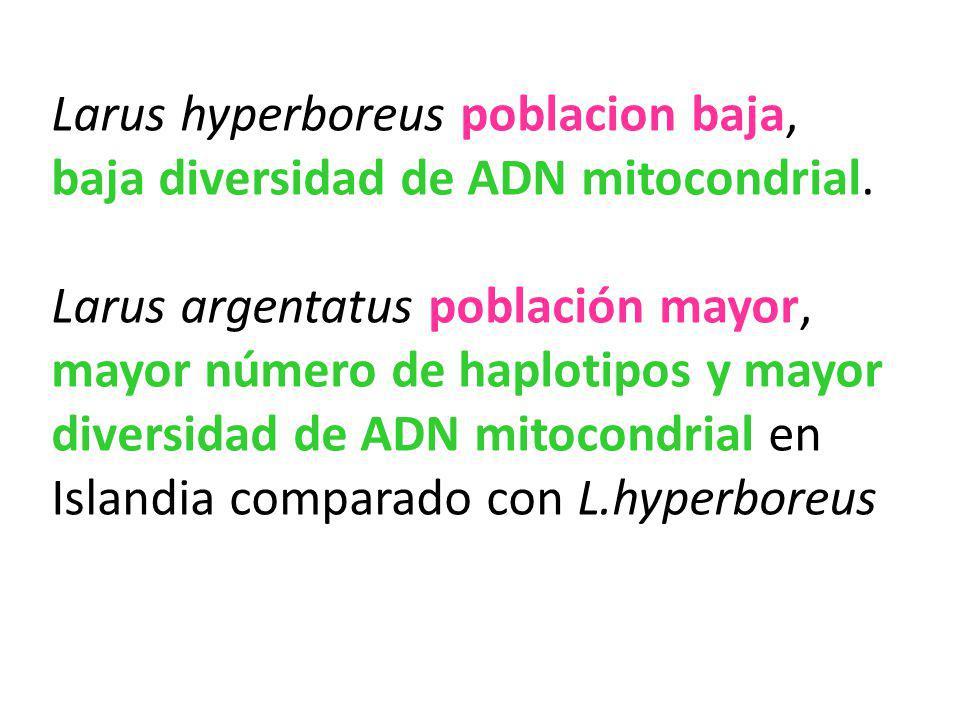 Larus hyperboreus poblacion baja, baja diversidad de ADN mitocondrial. Larus argentatus población mayor, mayor número de haplotipos y mayor diversidad