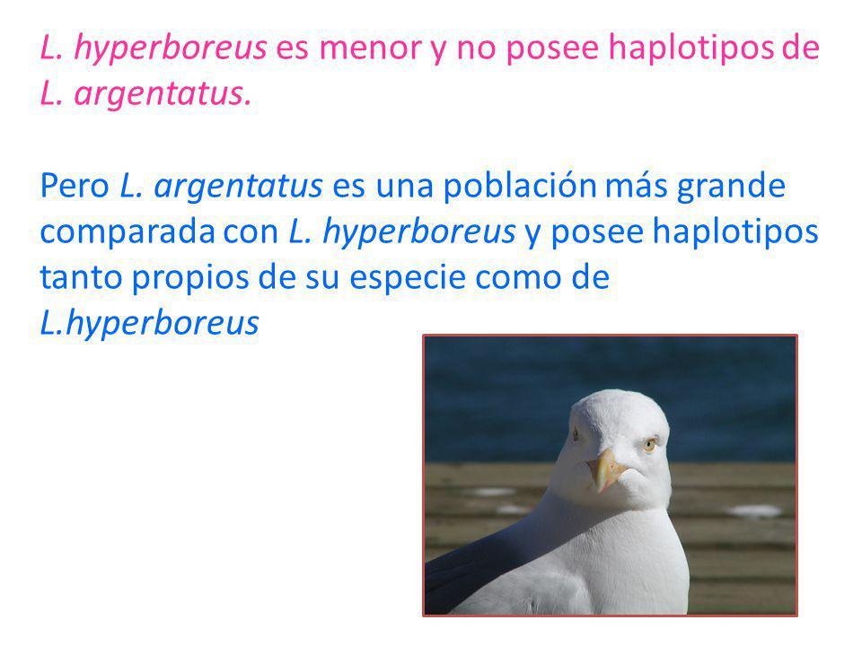 L. hyperboreus es menor y no posee haplotipos de L. argentatus. Pero L. argentatus es una población más grande comparada con L. hyperboreus y posee ha