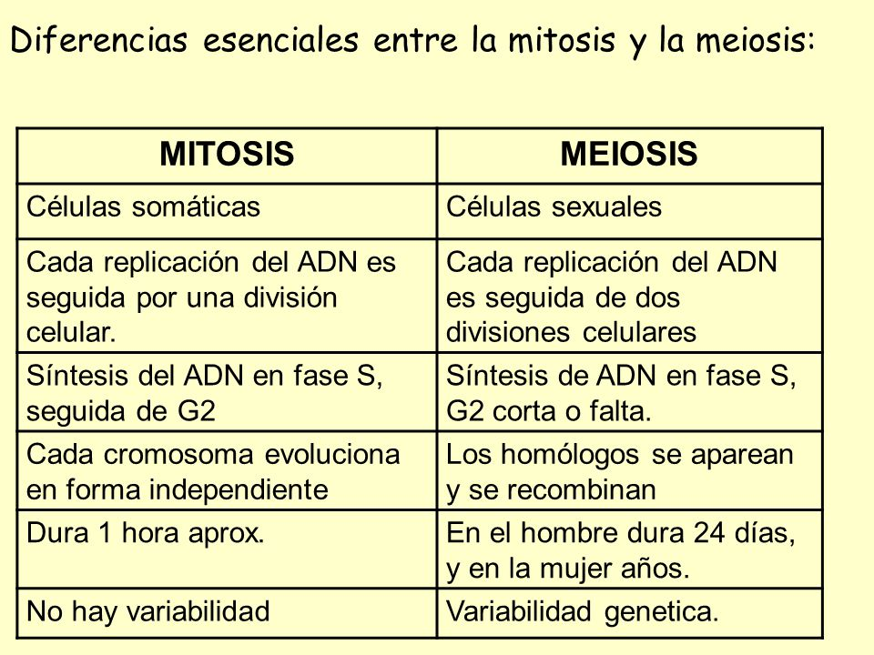 Diferencias esenciales entre la mitosis y la meiosis: MITOSISMEIOSIS Células somáticasCélulas sexuales Cada replicación del ADN es seguida por una div