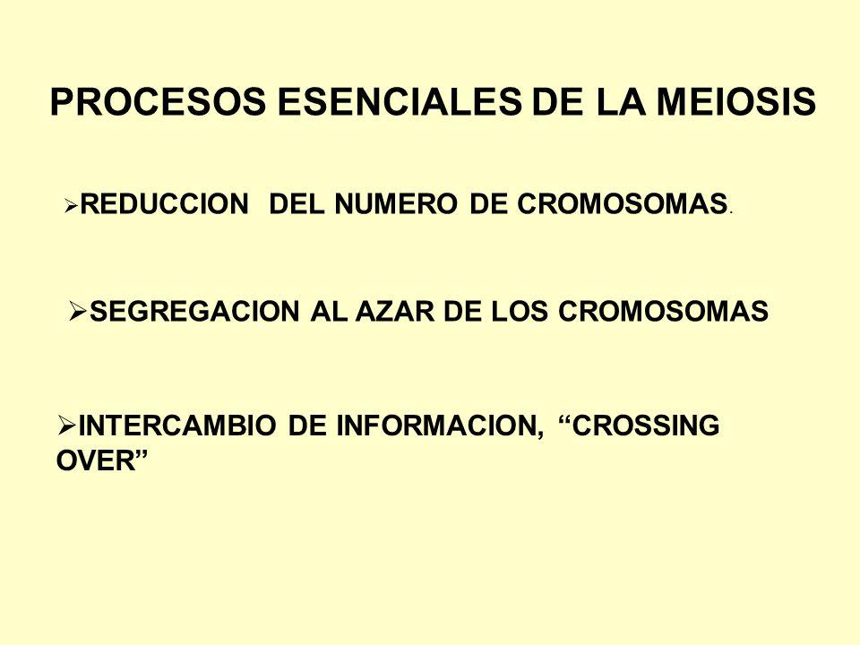 PROCESOS ESENCIALES DE LA MEIOSIS REDUCCION DEL NUMERO DE CROMOSOMAS. SEGREGACION AL AZAR DE LOS CROMOSOMAS INTERCAMBIO DE INFORMACION, CROSSING OVER