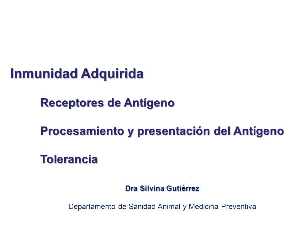 Inmunidad Adquirida Receptores de Antígeno Procesamiento y presentación del Antígeno Tolerancia Dra Silvina Gutiérrez Departamento de Sanidad Animal y
