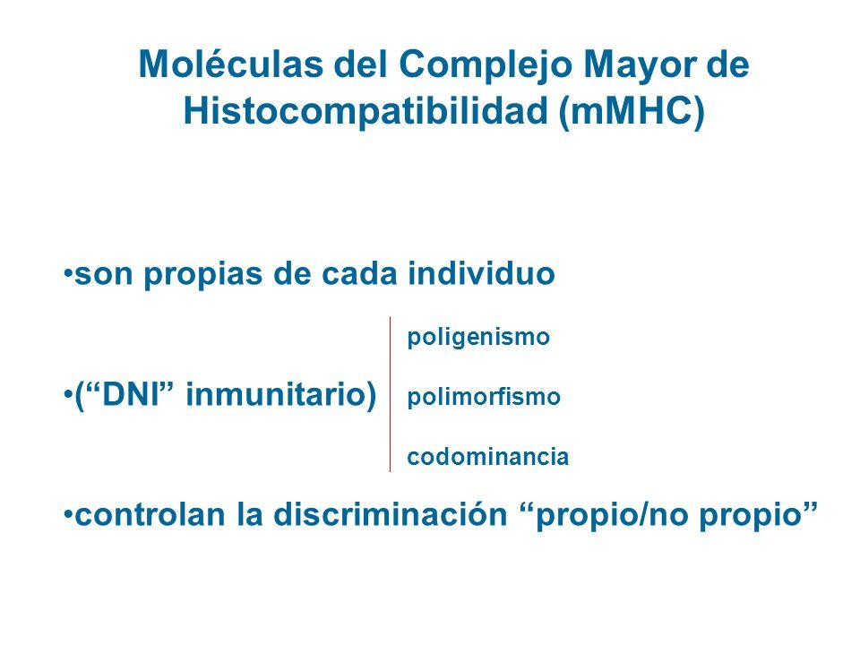 Moléculas del Complejo Mayor de Histocompatibilidad (mMHC) son propias de cada individuo poligenismo (DNI inmunitario) polimorfismo codominancia contr