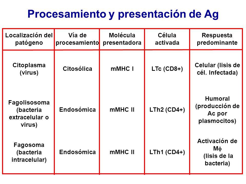 Procesamiento y presentación de Ag Localización del patógeno Vía de procesamiento Molécula presentadora Célula activada Respuesta predominante Citopla
