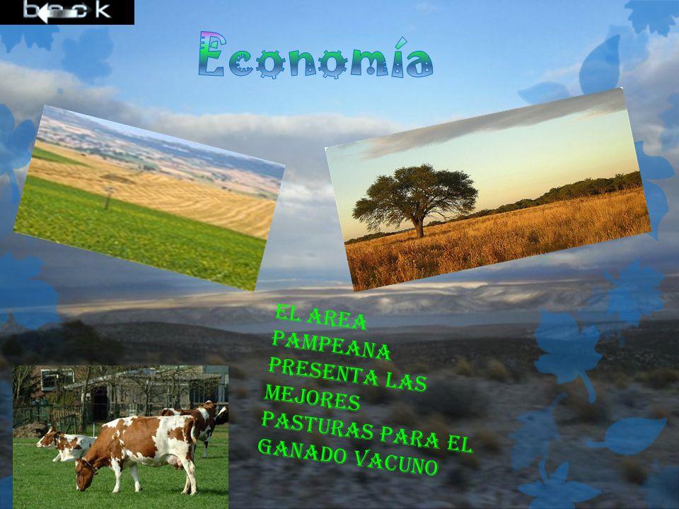 El area pampeana presenta las mejores pasturas para el ganado vacuno