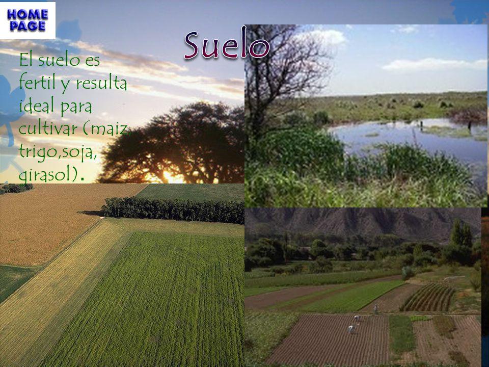 El suelo es fertil y resulta ideal para cultivar (maiz, trigo,soja, girasol).