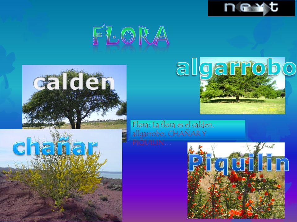 Flora: La flora es el calden, allgarrobo, CHAÑAR Y PIQUILIN…