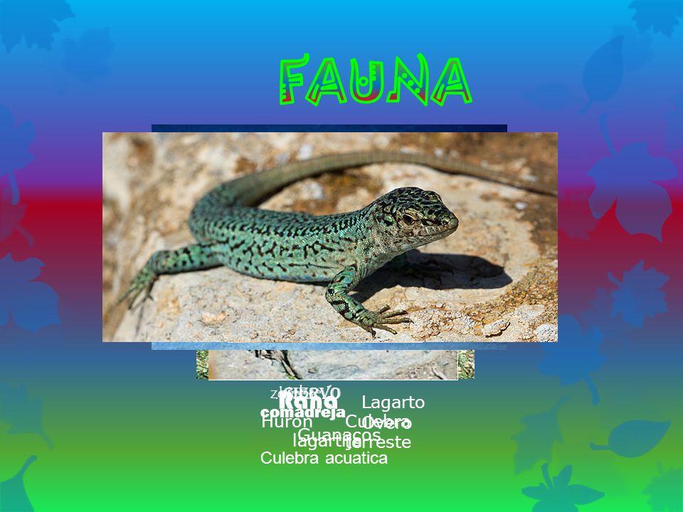 Liebrezorro ciervo Rana comadreja Lagarto Overo Culebra acuatica Huron Guanacos Culebra terreste lagartija