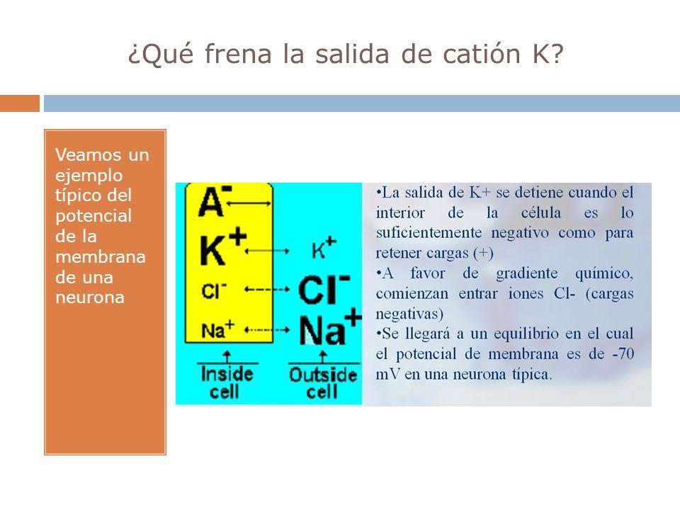 ¿Qué frena la salida de catión K? Veamos un ejemplo típico del potencial de la membrana de una neurona