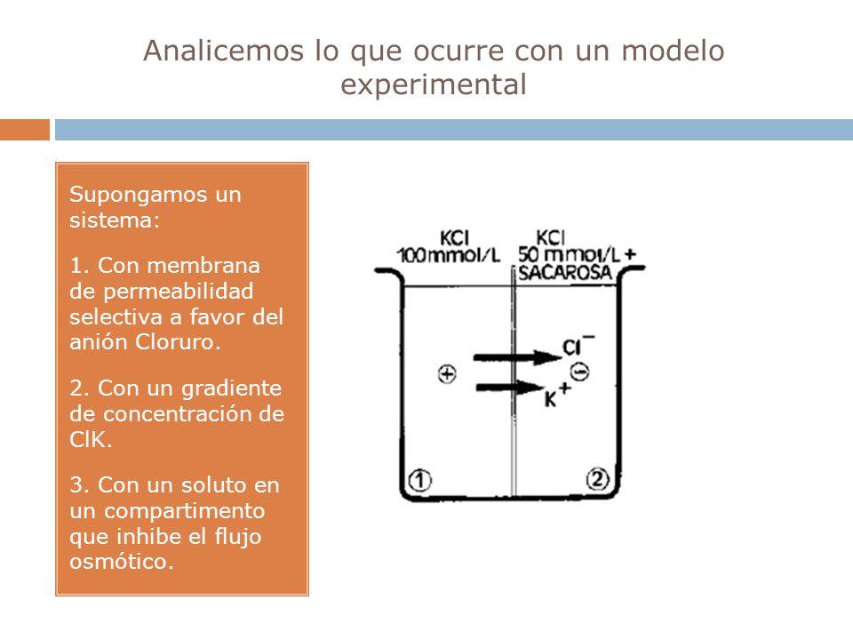Analicemos lo que ocurre con un modelo experimental Supongamos un sistema: 1. Con membrana de permeabilidad selectiva a favor del anión Cloruro. 2. Co