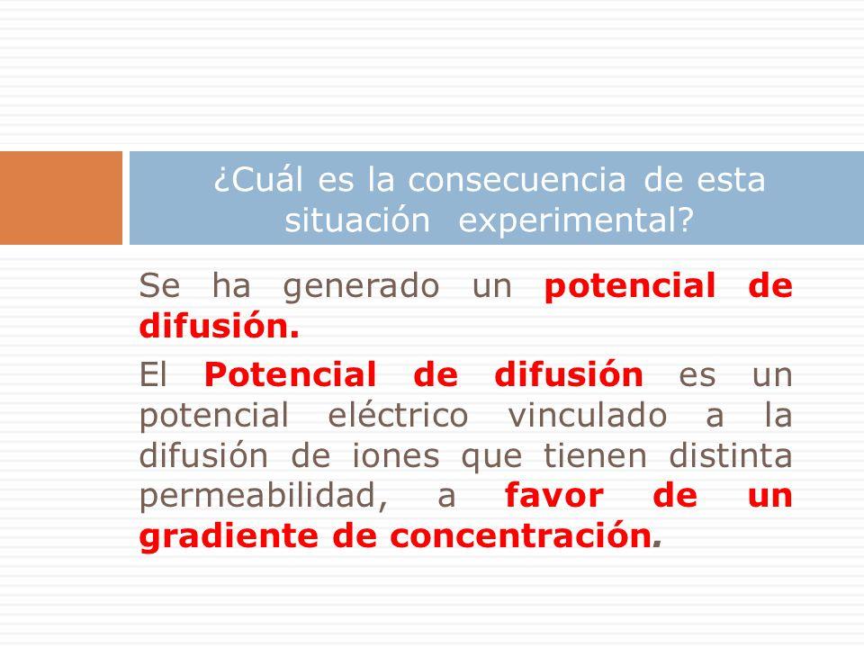 Se ha generado un potencial de difusión. El Potencial de difusión es un potencial eléctrico vinculado a la difusión de iones que tienen distinta perme