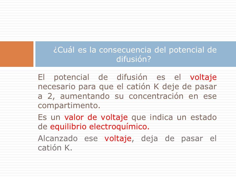 El potencial de difusión es el voltaje necesario para que el catión K deje de pasar a 2, aumentando su concentración en ese compartimento.