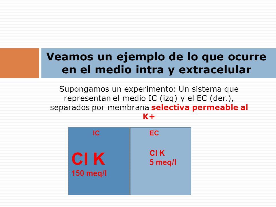 Supongamos un experimento: Un sistema que representan el medio IC (izq) y el EC (der.), separados por membrana selectiva permeable al K+ Veamos un ejemplo de lo que ocurre en el medio intra y extracelular ICEC Cl K 150 meq/l Cl K 5 meq/l