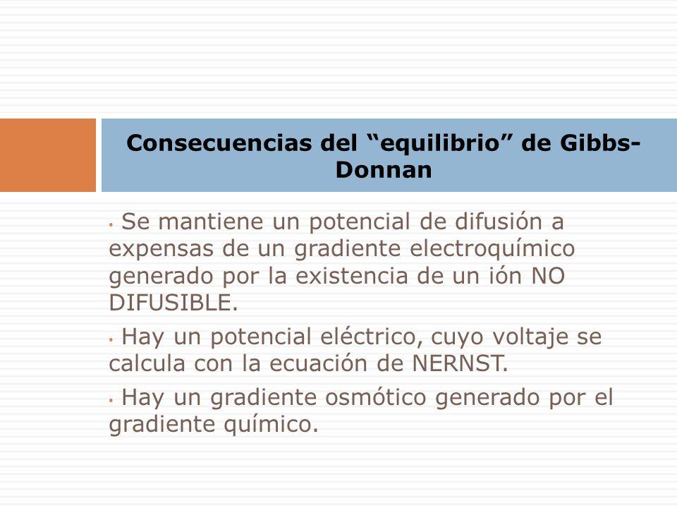 Consecuencias del equilibrio de Gibbs- Donnan Se mantiene un potencial de difusión a expensas de un gradiente electroquímico generado por la existencia de un ión NO DIFUSIBLE.