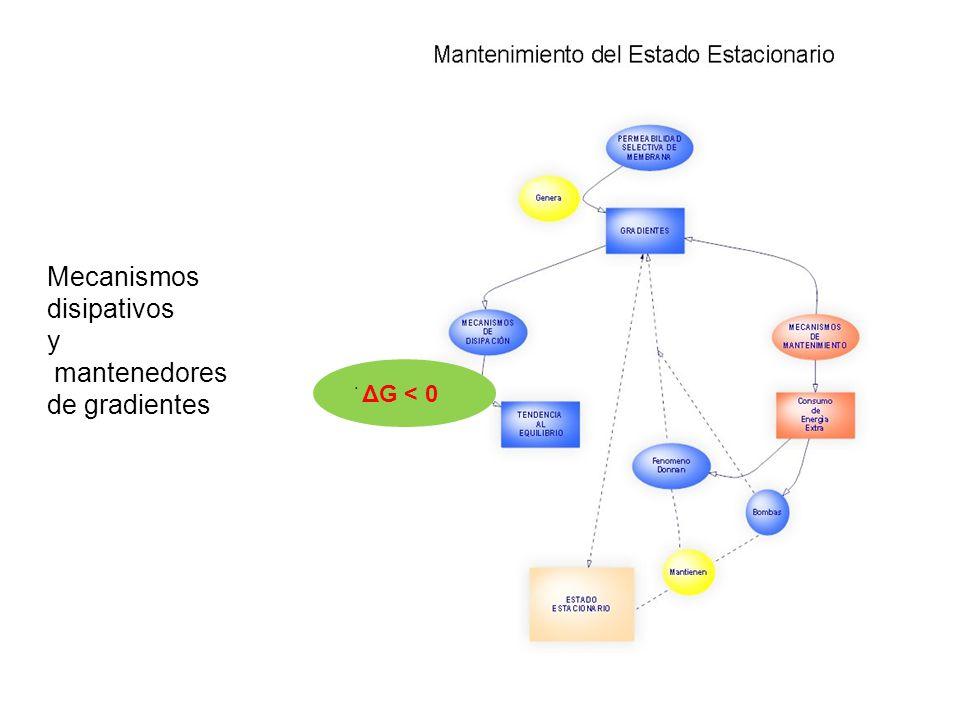 Mecanismos disipativos y mantenedores de gradientes ׄ ΔG < 0