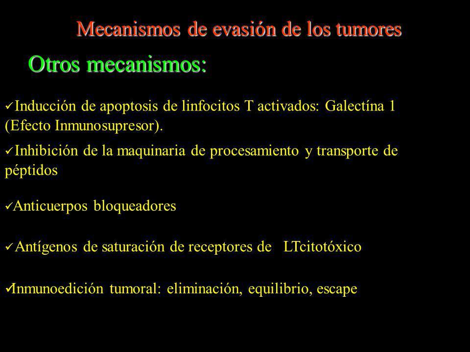 Otros mecanismos: Inducción de apoptosis de linfocitos T activados: Galectína 1 (Efecto Inmunosupresor). Inhibición de la maquinaria de procesamiento
