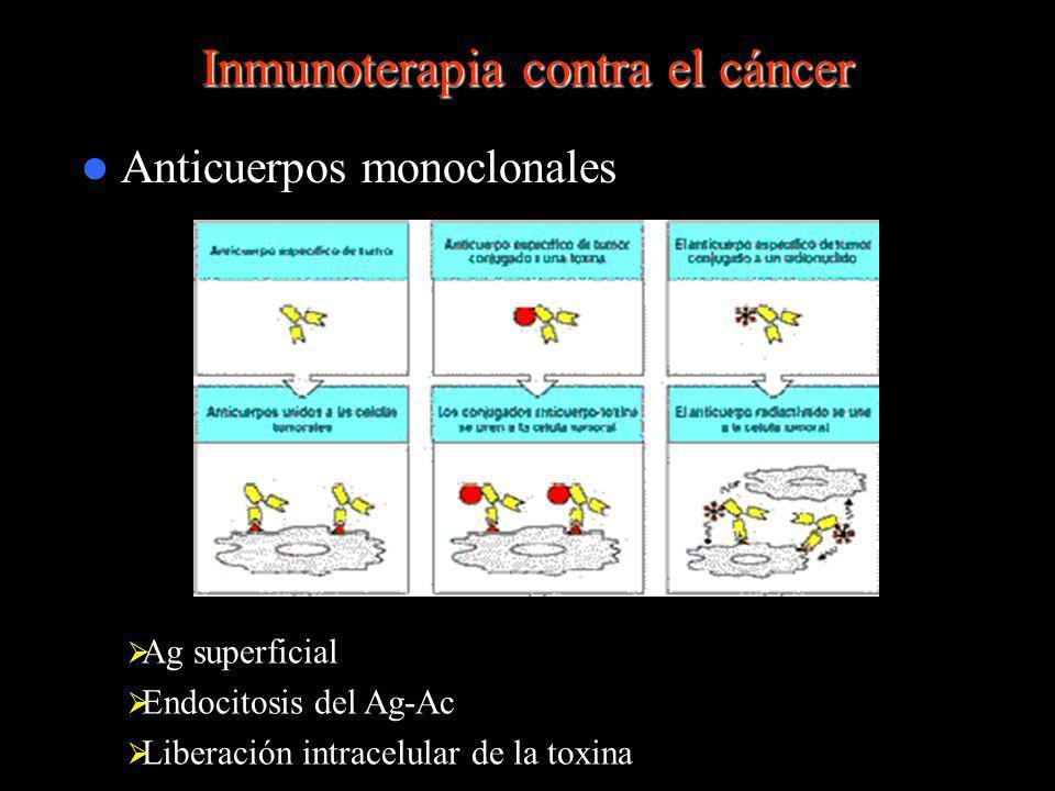 Inmunoterapia contra el cáncer Anticuerpos monoclonales Ag superficial Endocitosis del Ag-Ac Liberación intracelular de la toxina