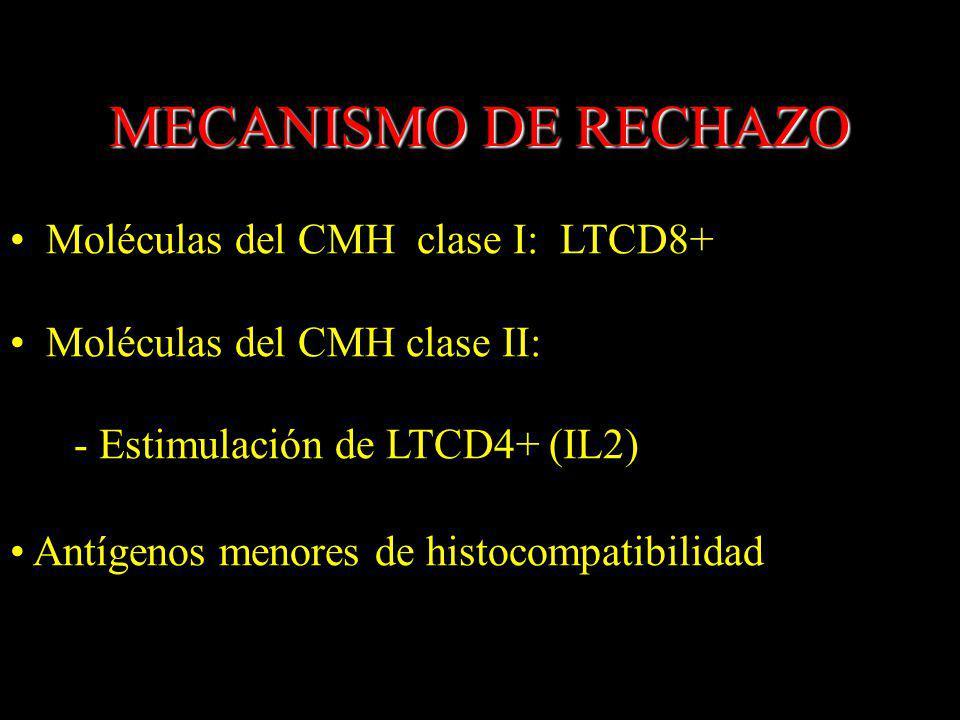 MECANISMO DE RECHAZO Moléculas del CMH clase I: LTCD8+ Moléculas del CMH clase II: - Estimulación de LTCD4+ (IL2) Antígenos menores de histocompatibil
