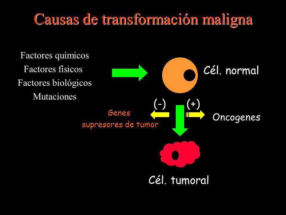 Causas de transformación maligna Factores químicos Factores físicos Factores biológicos Mutaciones Oncogenes Genes supresores de tumor Cél. tumoral Cé