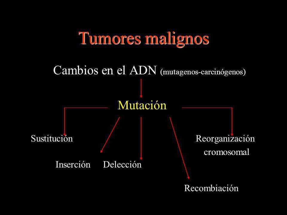 Inmunobiología tumoral Inmunovigilancia Escape inmunológico