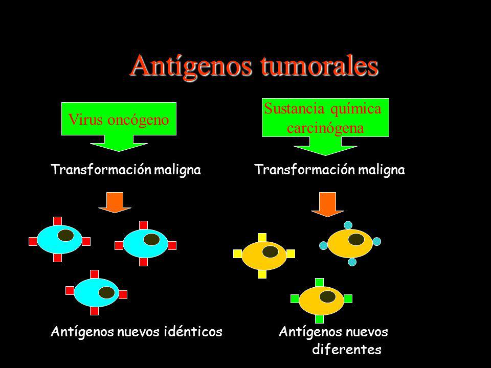 Antígenos tumorales Transformación maligna Antígenos nuevos idénticos Antígenos nuevos diferentes Virus oncógeno Sustancia química carcinógena