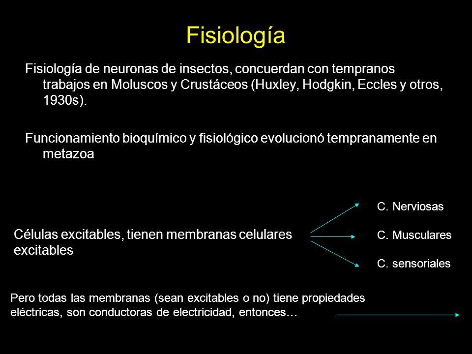 Fisiología Fisiología de neuronas de insectos, concuerdan con tempranos trabajos en Moluscos y Crustáceos (Huxley, Hodgkin, Eccles y otros, 1930s). Fu