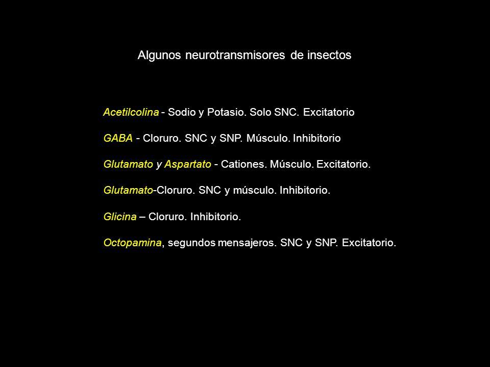 Acetilcolina - Sodio y Potasio. Solo SNC. Excitatorio GABA - Cloruro. SNC y SNP. Músculo. Inhibitorio Glutamato y Aspartato - Cationes. Músculo. Excit
