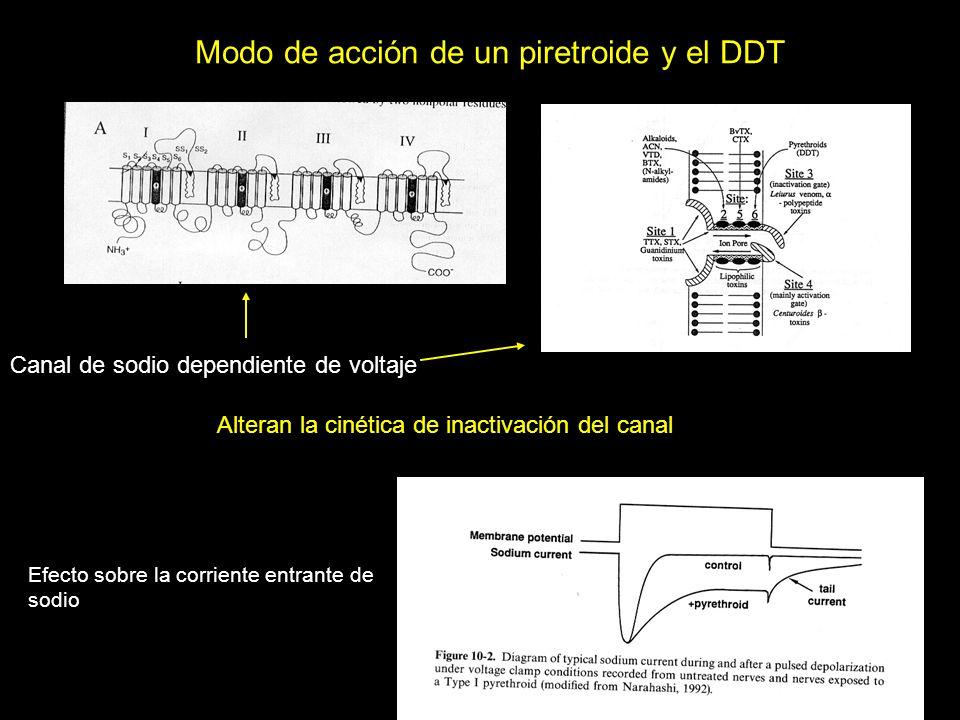 Modo de acción de un piretroide y el DDT Canal de sodio dependiente de voltaje Efecto sobre la corriente entrante de sodio Alteran la cinética de inac