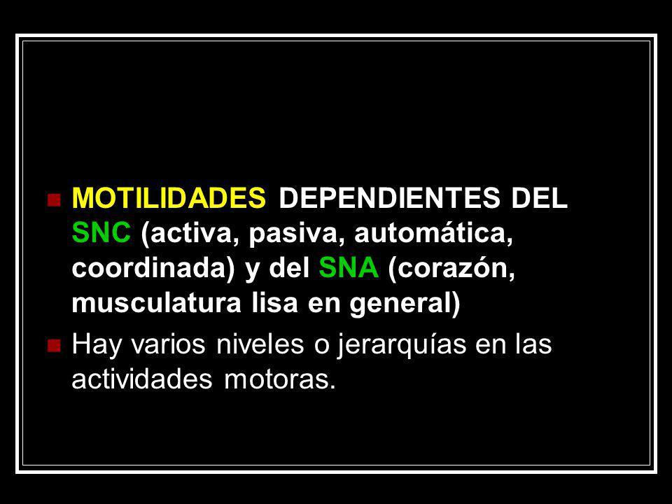 MOTILIDADES DEPENDIENTES DEL SNC (activa, pasiva, automática, coordinada) y del SNA (corazón, musculatura lisa en general) Hay varios niveles o jerarq