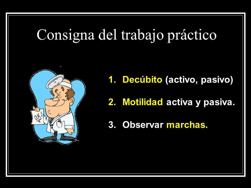 Consigna del trabajo práctico 1.Decúbito (activo, pasivo) 2.Motilidad activa y pasiva. 3.Observar marchas.