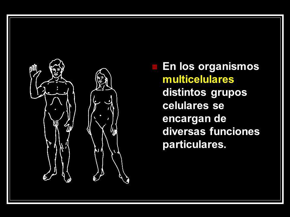 El cuerpo humano posee millones de células que se agrupan en tejidos, estos constituyen los órganos que … se agrupan en ocho aparatos o sistemas el locomotor (óseo y muscular) el respiratorio, el digestivo, el excretor, el circulatorio, el endócrino, el nervioso y el reproductor.