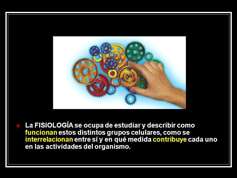 La FISIOLOGÍA se ocupa de estudiar y describir como funcionan estos distintos grupos celulares, como se interrelacionan entre sí y en qué medida contr