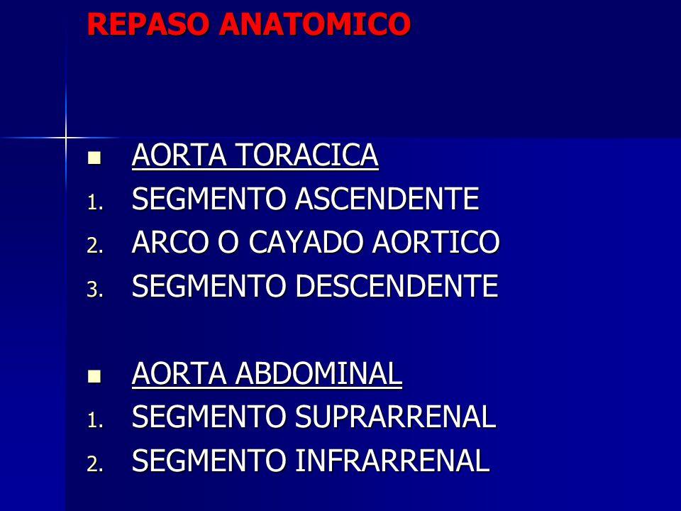 REPASO ANATOMICO AORTA TORACICA AORTA TORACICA 1. SEGMENTO ASCENDENTE 2. ARCO O CAYADO AORTICO 3. SEGMENTO DESCENDENTE AORTA ABDOMINAL AORTA ABDOMINAL