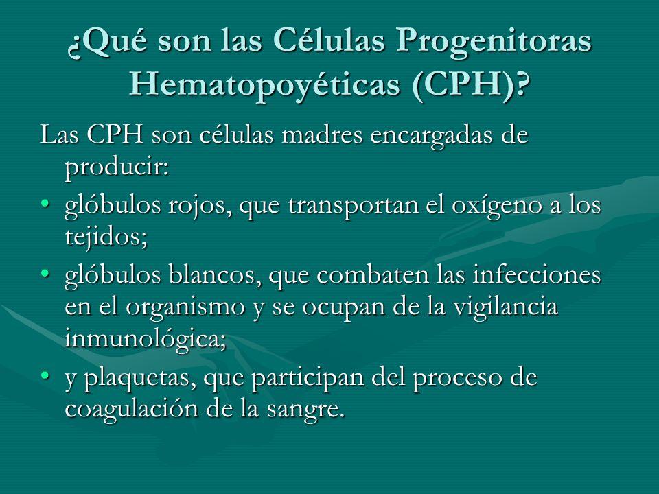 ¿Qué son las Células Progenitoras Hematopoyéticas (CPH)? Las CPH son células madres encargadas de producir: glóbulos rojos, que transportan el oxígeno
