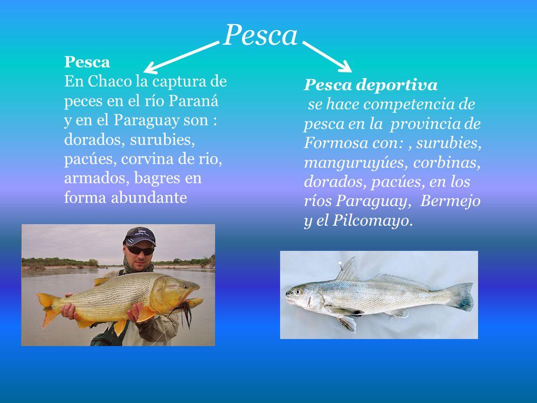 Pesca En Chaco la captura de peces en el río Paraná y en el Paraguay son : dorados, surubies, pacúes, corvina de rio, armados, bagres en forma abundan