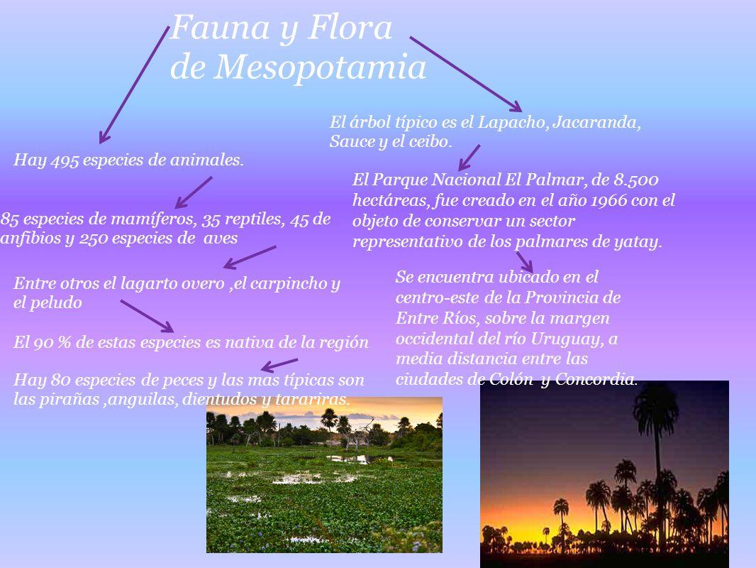 El árbol típico es el Lapacho, Jacaranda, Sauce y el ceibo. Fauna y Flora de Mesopotamia Hay 495 especies de animales. 85 especies de mamíferos, 35 re