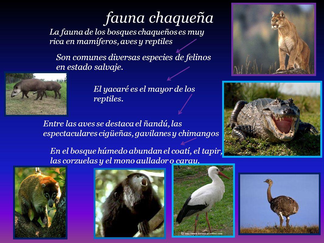 fauna chaqueña Son comunes diversas especies de felinos en estado salvaje. La fauna de los bosques chaqueños es muy rica en mamíferos, aves y reptiles