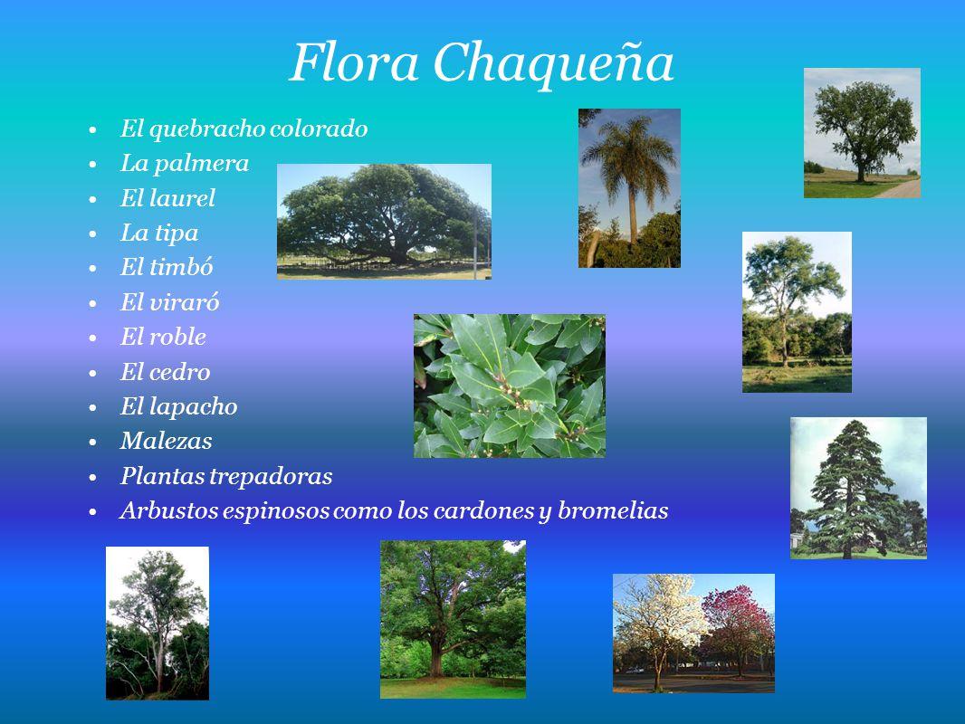 Flora Chaqueña El quebracho colorado La palmera El laurel La tipa El timbó El viraró El roble El cedro El lapacho Malezas Plantas trepadoras Arbustos