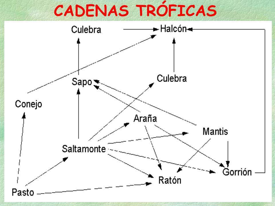 CADENAS TRÓFICAS
