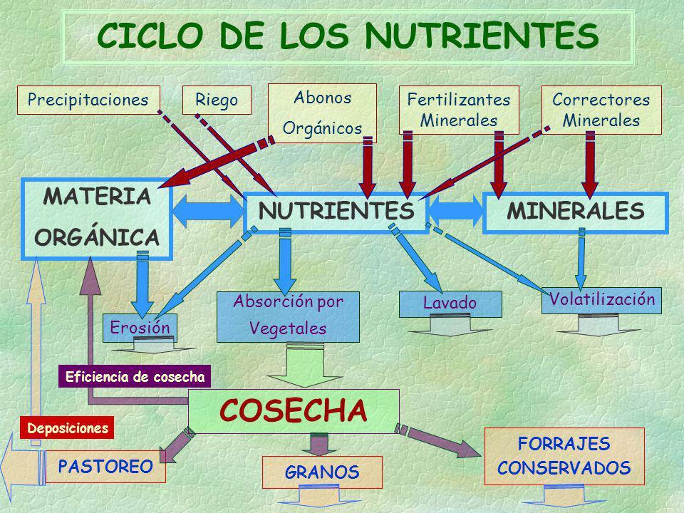 CICLO DE LOS NUTRIENTES PrecipitacionesRiego Abonos Orgánicos Fertilizantes Minerales Correctores Minerales MATERIA ORGÁNICA NUTRIENTESMINERALES Erosi