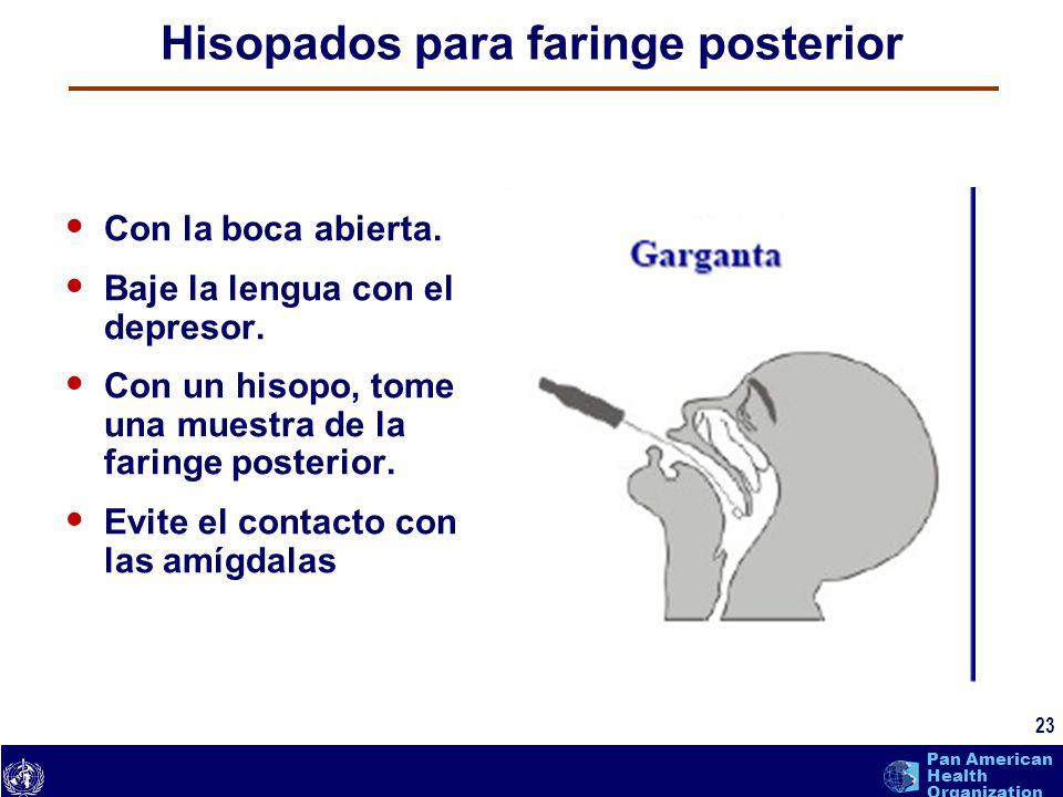 text 23 Pan American Health Organization Hisopados para faringe posterior Con la boca abierta. Baje la lengua con el depresor. Con un hisopo, tome una