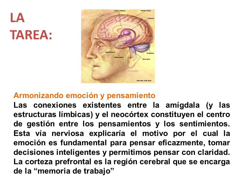 Armonizando emoción y pensamiento Las conexiones existentes entre la amígdala (y las estructuras límbicas) y el neocórtex constituyen el centro de ges